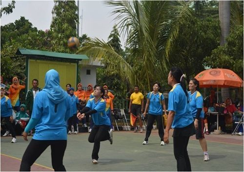Volly 051