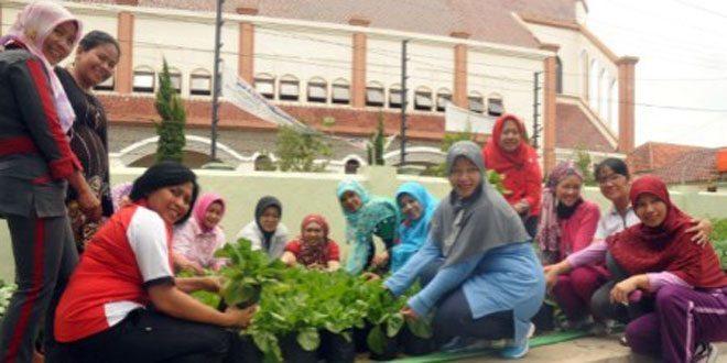 Anggota Persit Panen Sayuran