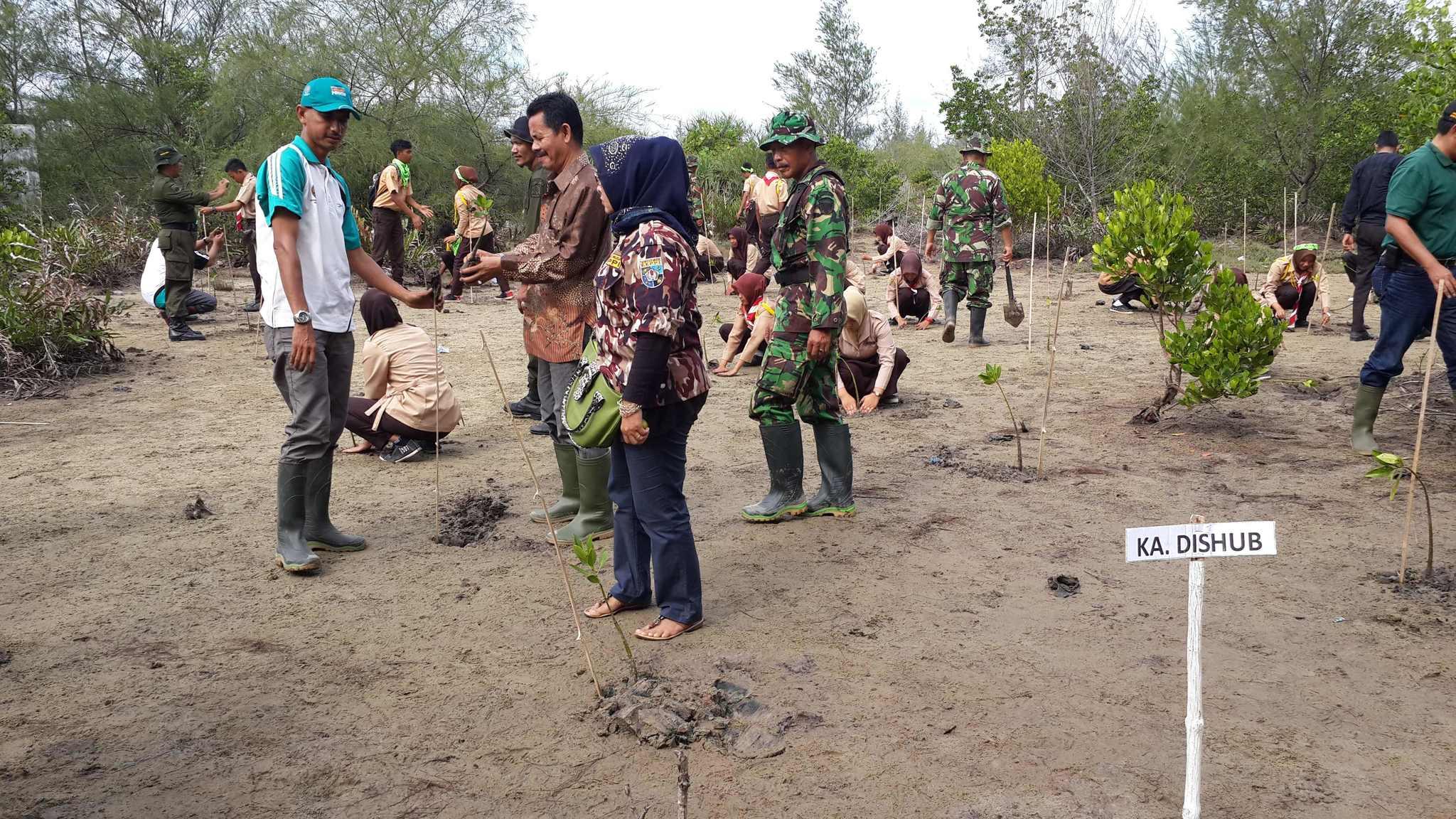 Kodim Aceh Timur Tanam 2000 Pohon Mangrove