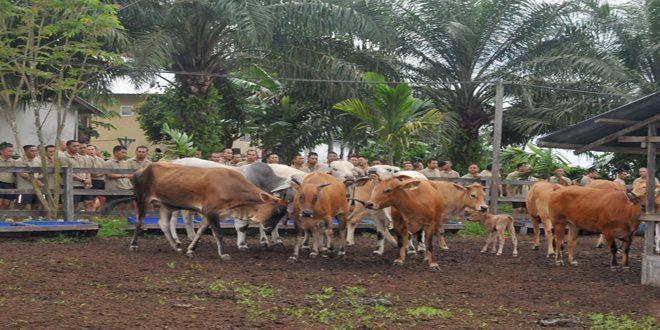 Kasad Tinjau Pembuatan Bio Gas Dari Limbah Kotoran Sapi di Pangkalan Bun Kalteng