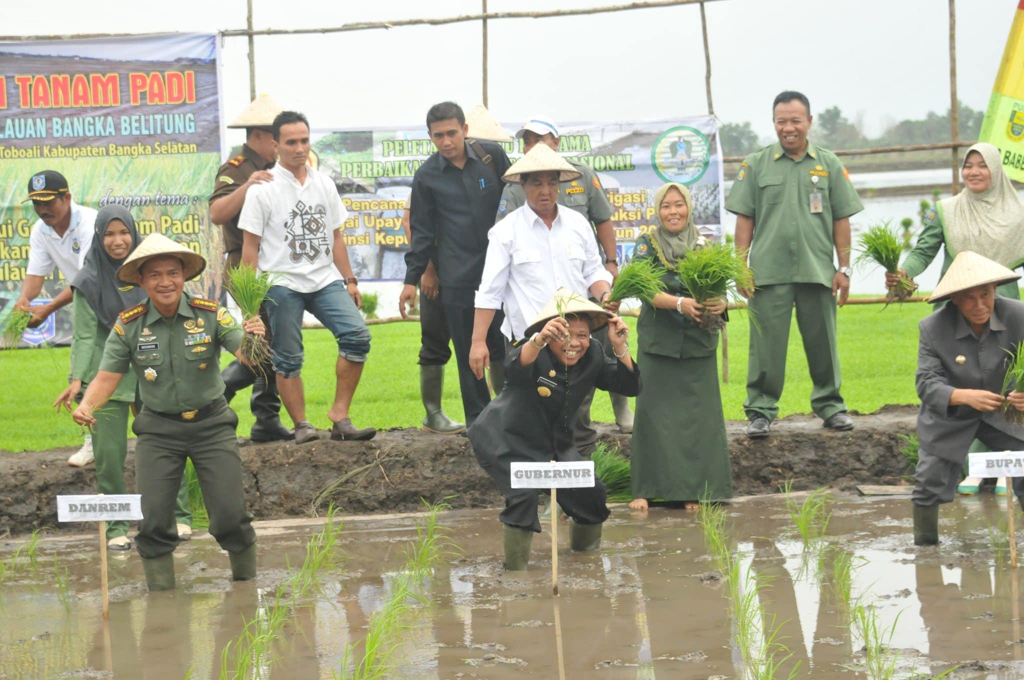 Danrem 045 Bersama Gubernur Tanam Padi Perdana di Toboali