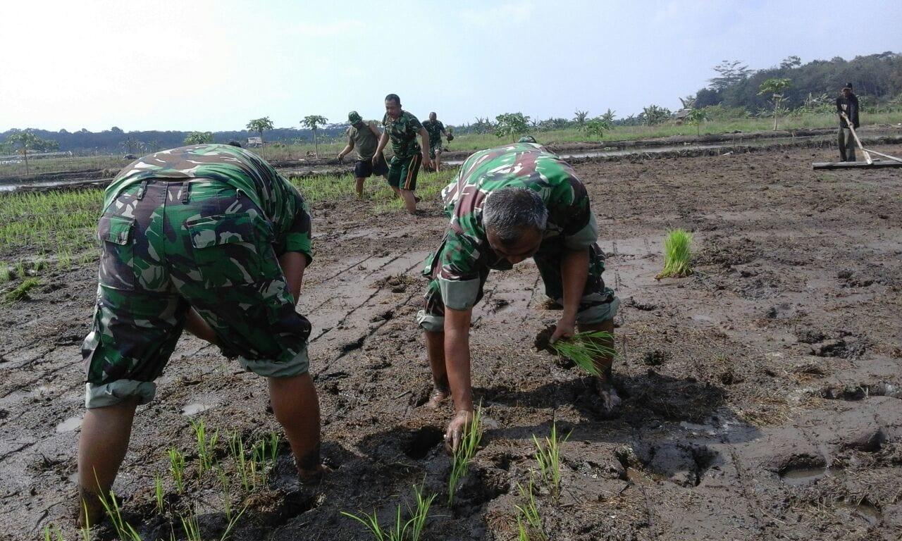 TNI Dan Petani Kompak Bercocok Tanam