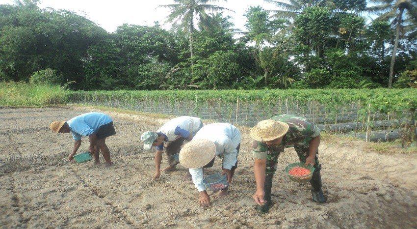 Musim Berubah, Petani Beralih Ke Tanam Jagung