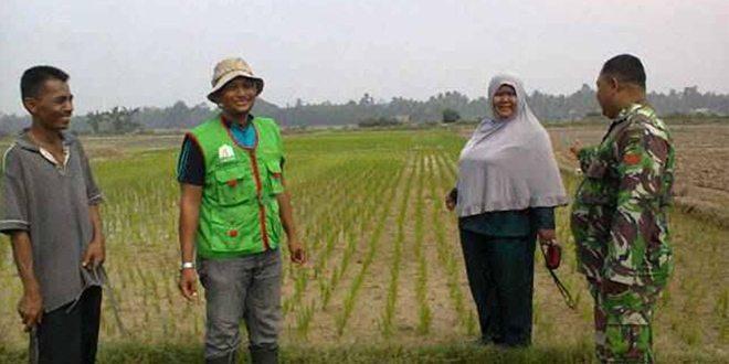 Babinsa Ramil 13/Bdh Bersama Mantri Tani dan PPL Cek Lahan Pertanian
