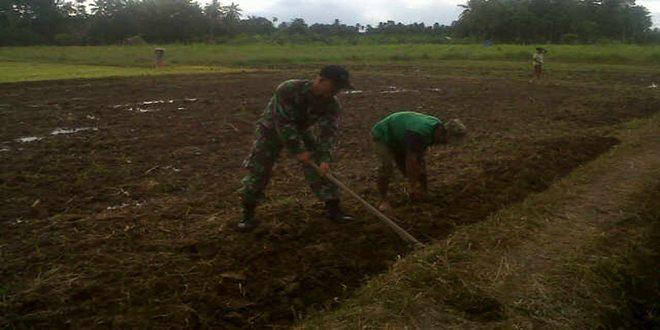 Babinsa Koramil 06Teunom Mebantu Kelompok tani membuat tanggul sawah