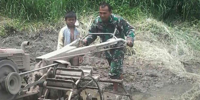 Babinsa Koramil Model 05/Lampahan Bantu Masyarakat Membajak Sawah