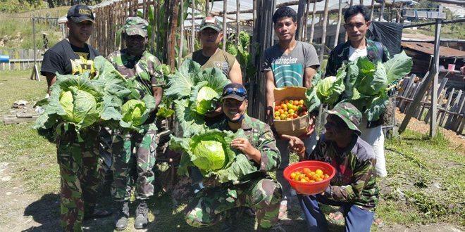 Posramil Sugapa Kodim 1705/Paniai Panen Sayur Kebun Percontohan