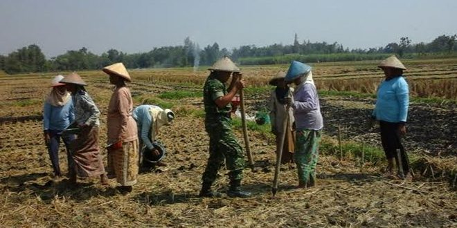 Bati Tuud Gudo Pimpin Babinsa dan Petani Tanam Jagung di Musim Kemarau