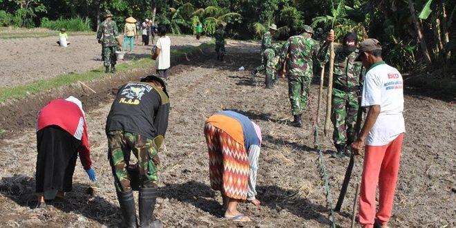 Koramil 05/Sleman Bantu Petani Tanam Jagung Hibrida