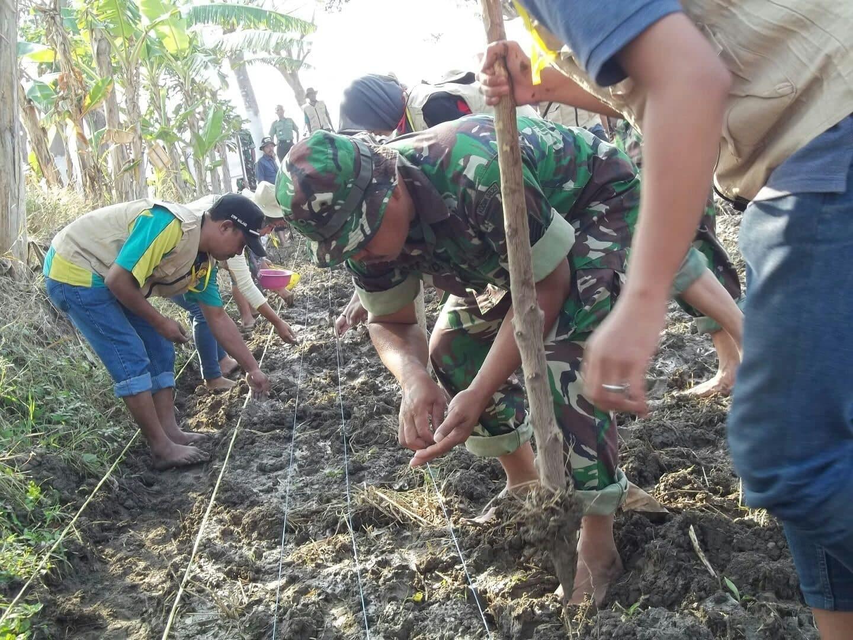 Demplot Pertanian Babinsa Kamal Jadi Contoh Petani Tni Angkatan Darat