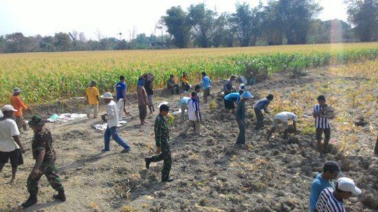 Anggota Koramil 0813-15/Ngraho Turut Mengikuti Kerja Bakti Di Desa Binaanya
