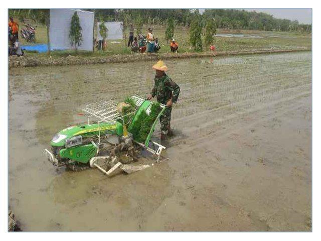 Babinsa Rengel Dampingi Petani Dalam Penyerahan Bibit Gratis dan Uji Transplanter