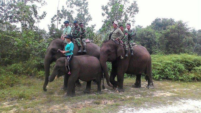 Satgas Pemadam Kebakaran Satuan Kostrad Patroli Kebakaran Di Riau Dengan Naik Gajah