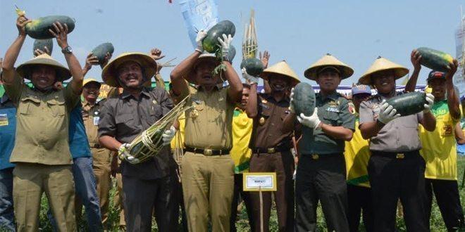 Semangka di Desa Balonggemek, Satu Solusi Jaga Ketahanan Pangan di Musim Kemarau