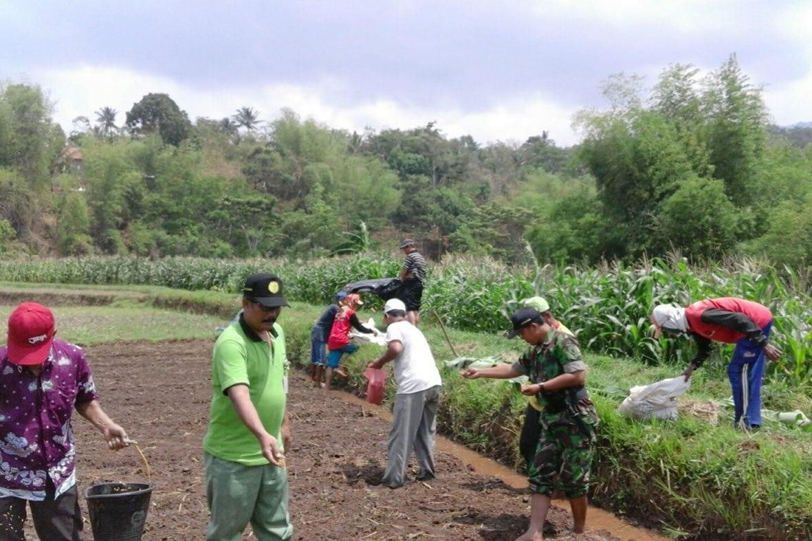 Babinsa dan PPL Pendampingan Penyemaian Padi di Desa Munggung