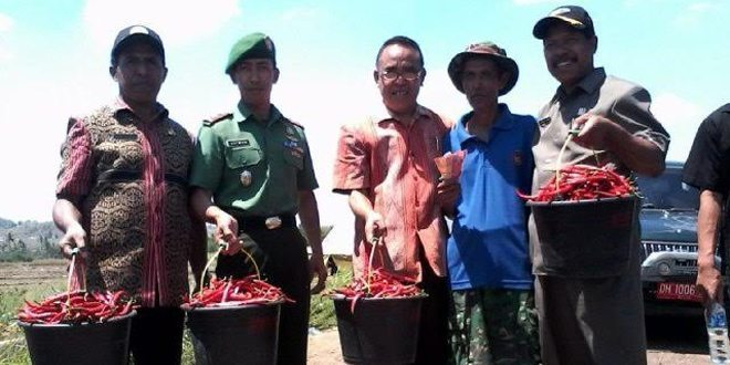 Kodim 1605/Belu Panen Perdana Tanaman Hortikultura
