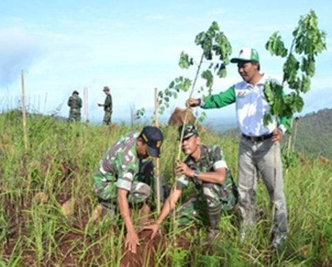 Babinsa Kodim 1006/Mtp Tanam 1500 Pohon Mahoni dan Trambesi