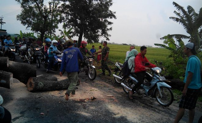 Babinsa Paron Ngawi dan petugas Dinas PU Singkirkan Pohon Tumbang