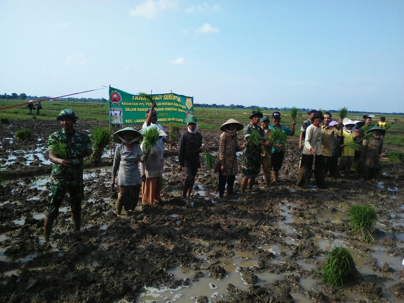 Koramil 16/Larangan Tanam Padi Serentak Di Desa Kedungbokor Larangan Brebes