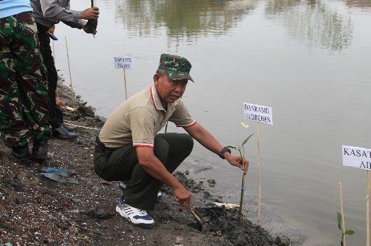 Kegiatan Penanaman Serentak 10.000 Pohon Mangrove Dalam Rangka HUT ke-70 Armada RI Pos TNI AL Brebes Lanal Tegal