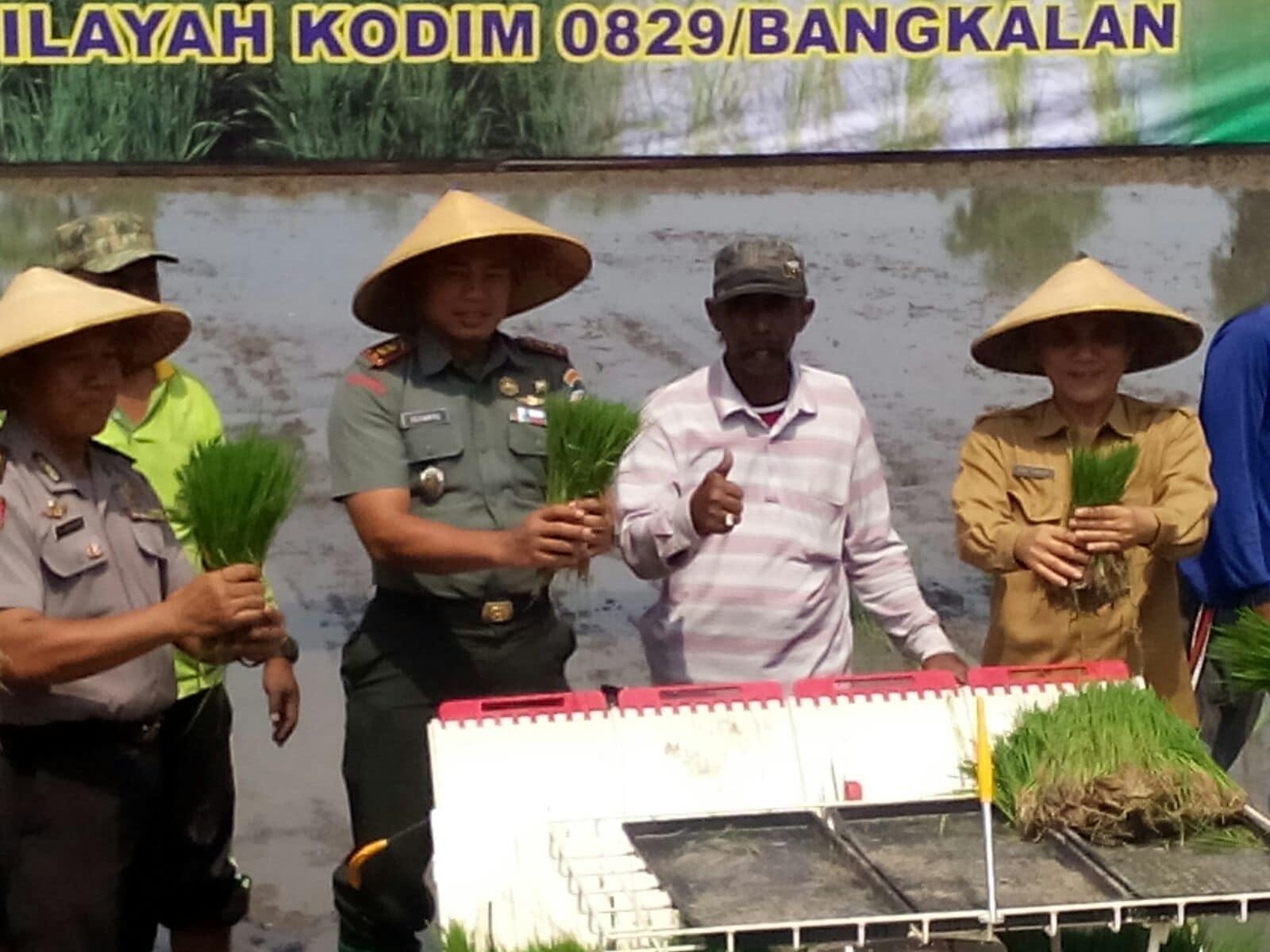Kodim dan Forpimda Bangkalan Tanam Padi Serentak