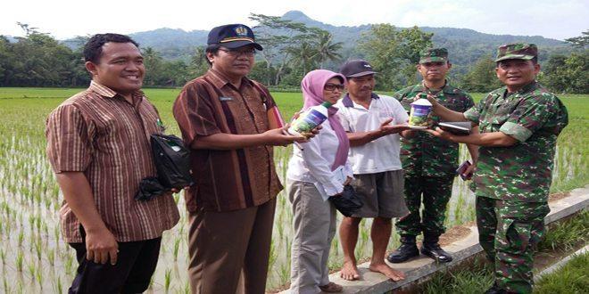 Pos Ramil 07/Sadang dan Pok Tani Sidoluhur, Mendapat Bantuan Pupuk Cair