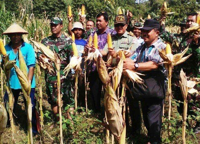 Danramil 12/Ngawen, Petik Jagung
