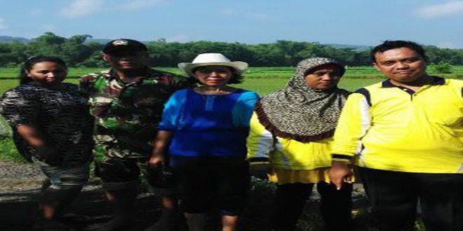Babinsa 10/Galis Bersama PPL dan Petani Mengecek Kesuburan Tanaman Padi