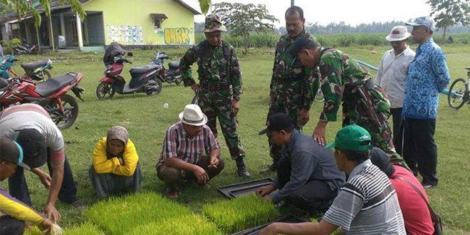 Launching Bibit Padi Unggulan Jenis Sembada B8 dan B9