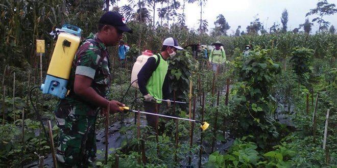 Babinsa Bersama Dinas Pertanian Ngadirejo Meninjau Tanaman Cabe