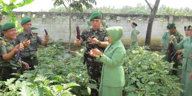 Panen Perdana Terus Ungu di Areal Perkebunan Kodim 0309/Solok