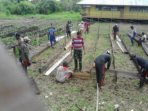 Babinsa Beri Contoh Bertani Kepada Masyarakat Dipedalaman Asmat