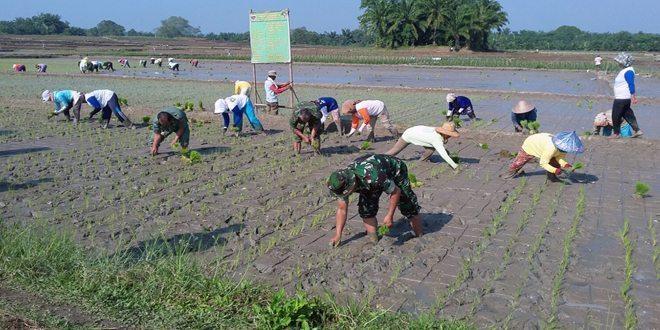 Pendampingan Kepada Petani Untuk Menyukseskan Swasembada Pangan