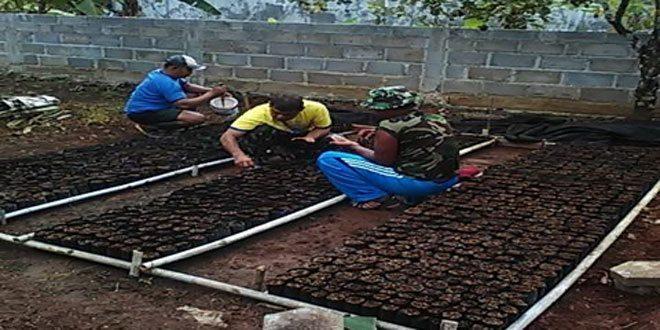 Koramil 07/Gunungpati Lakukan Pembibitan 1500 Polibeck Pohon Sengon