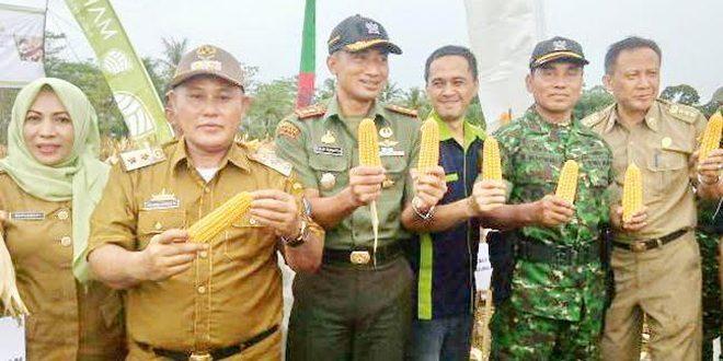 Dandim Lampung Selatan Panen Raya Jagung Di Desa Serdang Kec. Tanjung Bintang.