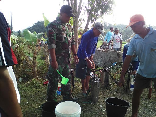 Babinsa, PPL dan Petani Lakukan Penyemprotan Secara Massal Penyakit Jamur pada Tanaman Padi