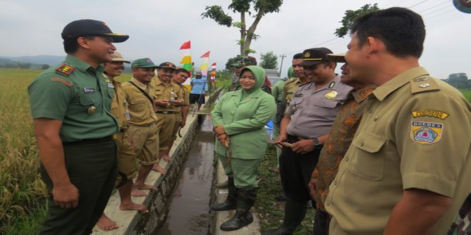 Panen Padi Serempak Nasional di Wilayah Kodim 0713/Brebes