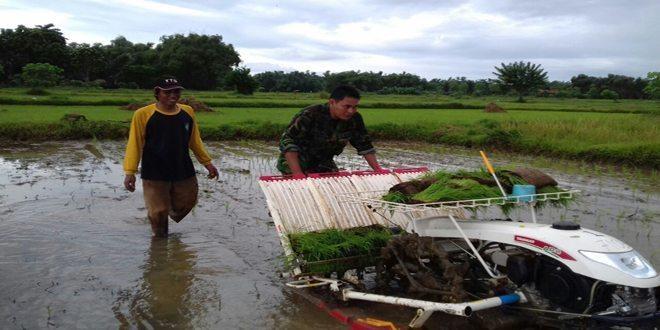 Babinsa Tragah Bangkalan Bersama Mantan PPL Bantu Petani Tanam Padi