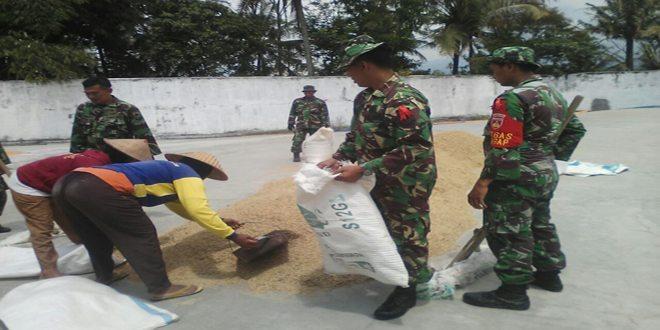 Anggota Koramil 07/ Tretep Lakukan Pendampingan Serapan Gabah ke Petani