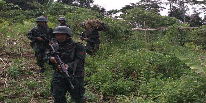 Yonif 406/CK Temukan Ladang Ganja di Papua