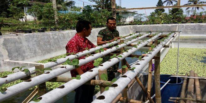 Babinsa Kepuharjo Koramil 01/Cangkringan Beri Motifasi Kepada Poktan Sayuran Hidroponic