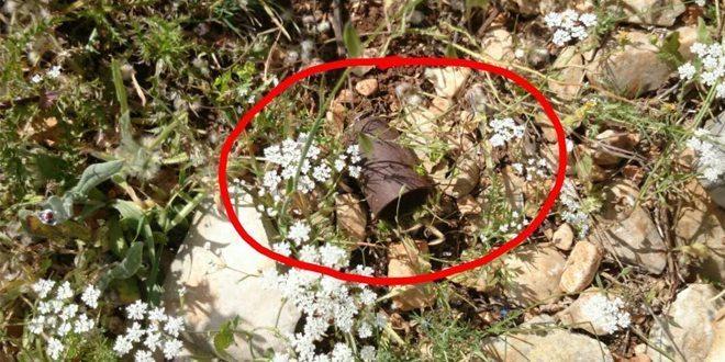Patroli Satgas Indobatt Konga XXIII-J/Unifil Temukan Bobby Trapping