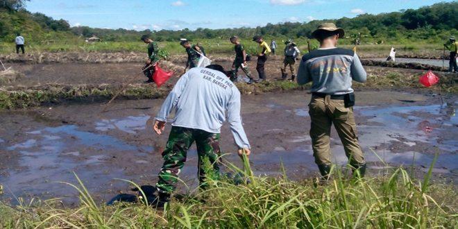 TNI Bersama Peserta Latsitardanus Turun ke Sawah