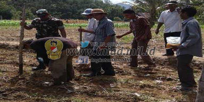 Babinsa Koramil 05/Batang Kapas Tanam Jagung Dukung Swasembada Pangan
