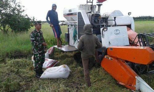 Babinsa Koramil 1707-05/Merauke Bantu Para Petani Di Kabupaten Merauke
