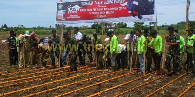 Gerakan Tanam Jagung Pioner di Aceh Selatan