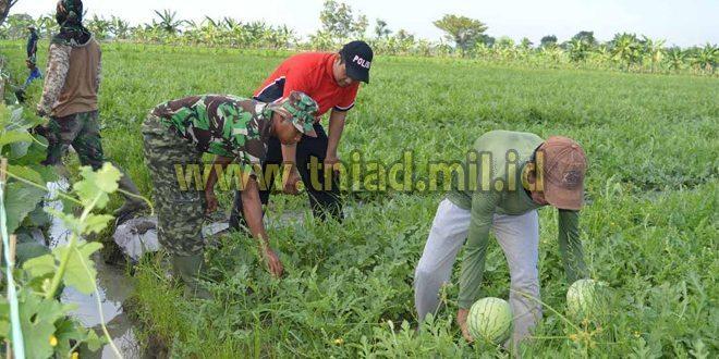 TNI Demak Apresiasi Warga Trengguli Yang Budidayakan Semangka