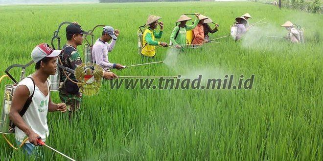 Atasi Hama, Prajurit TMMD Gelar Semprot Massal Bersama Petani Dan PPL