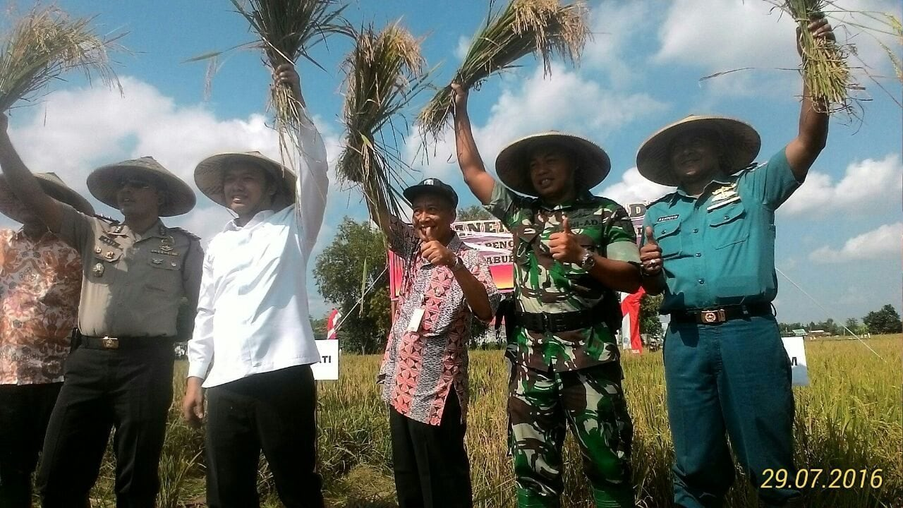 Dandim Dan Bupati Bangkalan Pimpin Panen Raya Padi (10)
