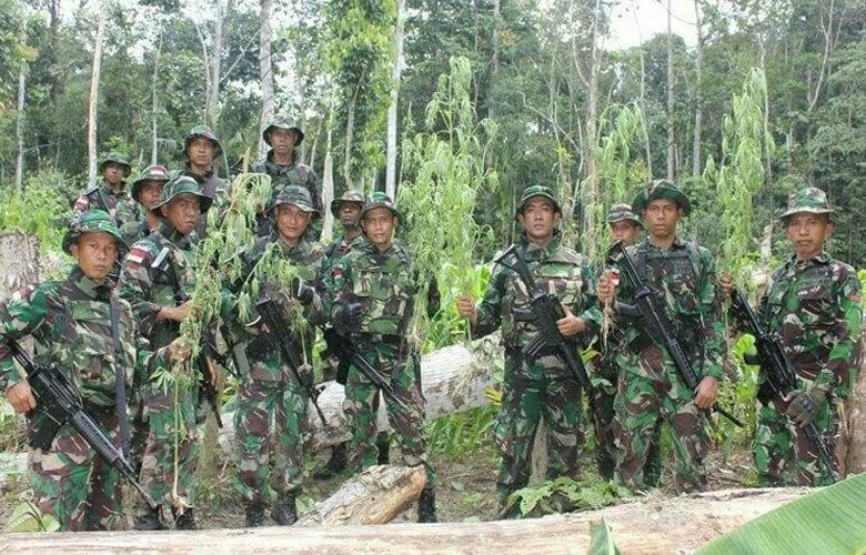 Satgas Pamtas RI-PNG Temukan Ladang Ganja